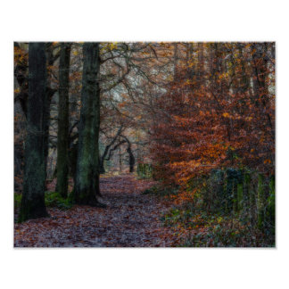 Autumn woods poster