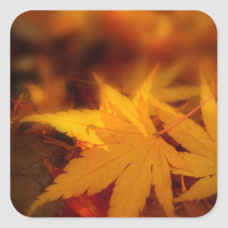 Autumnal serenity. square sticker