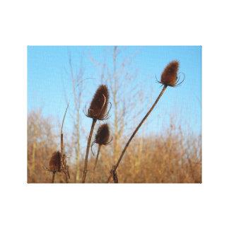 Autumnal Teasel Medium Frame Gallery Wrap Canvas