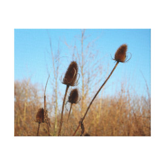 Autumnal Teasel Thin Frame Stretched Canvas Prints