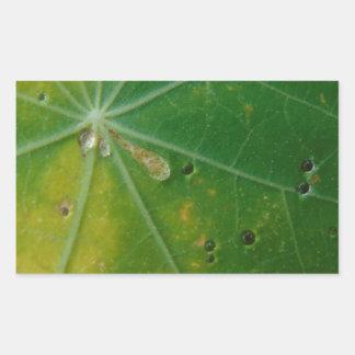 Autumn's Kiss Rectangular Sticker