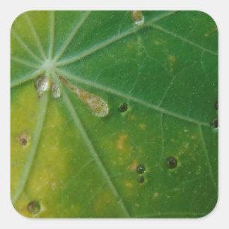 Autumn's Kiss Square Sticker