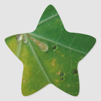 Autumn's Kiss Star Sticker