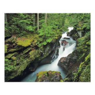 Avalanche Gorge in Glacier National Park in Art Photo