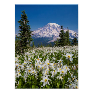 Avalanche lilies and Mount Rainier 2 Poster