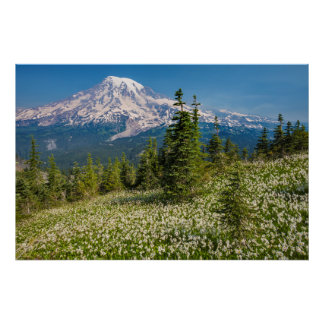 Avalanche lilies and Mount Rainier Poster