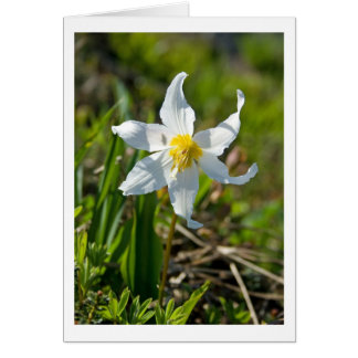Avalanche Lily Blank Card