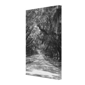 Avenue Of Oaks Grayscale Canvas Print