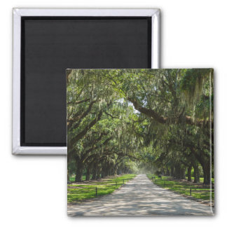 Avenue Of Oaks Magnet