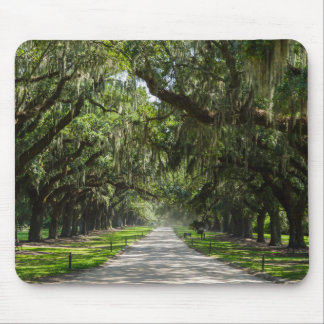 Avenue Of Oaks Mouse Pad