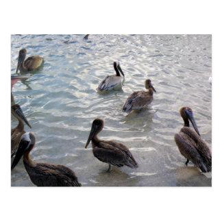 Aves Marinas La Guancha Postcard