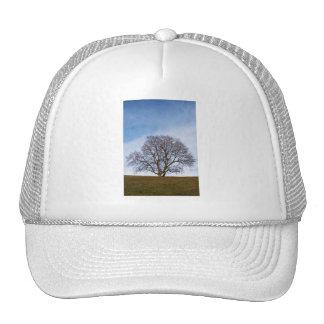 awaiting seasons mesh hat