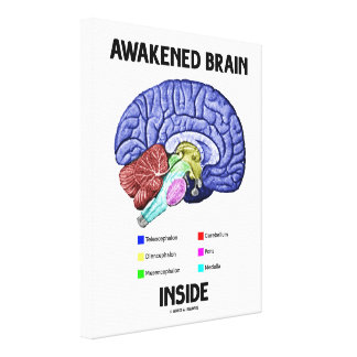 Awakened Brain Inside Brain Anatomy Geek Humor Canvas Print