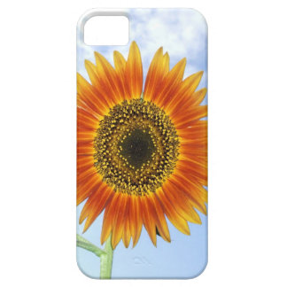 Awesome Autumn Beauty Sunflower and Spotted Sky iPhone 5 Cases