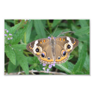 Awesome Butterfly Photo Print