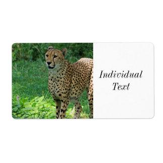 Awesome cheetah