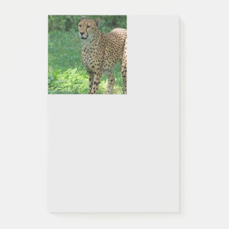 Awesome cheetah post-it notes