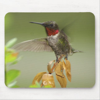 Awesome hummingbird mouse pad