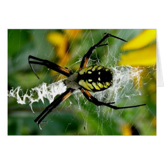 Awesome Photo Orb Spider in Web Blank Inside Card
