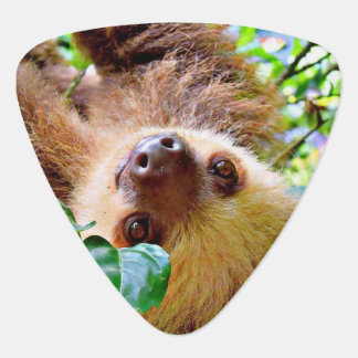 awesome Sloth Plectrum