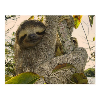 Awesome Sloth Postcard