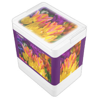 Awesome tulip flowers cooler