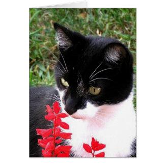 Awesome Tuxedo Cat in Garden Blank Inside Card