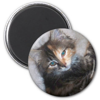 Awesome two faced cat refrigerator magnets