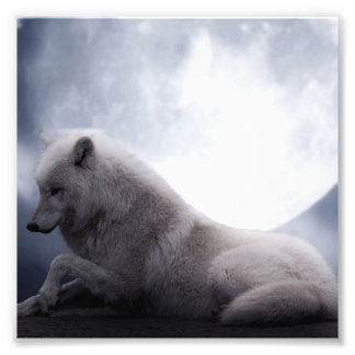 Awesome Wolf and Moon White Wolf Photo Art