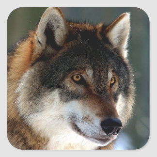 Awesome Wolf Head Square Sticker