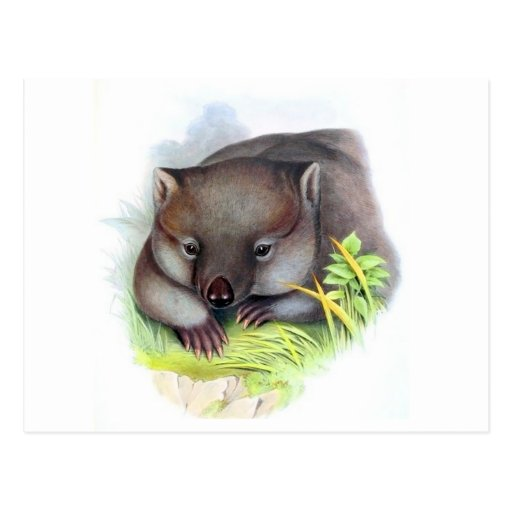 Awesomely cute Australian animal wombat vintage Post Card