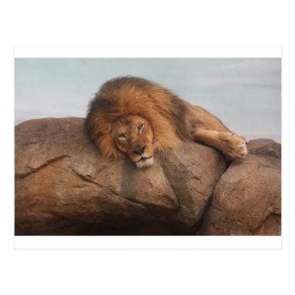 Awwsome Lion Postcard