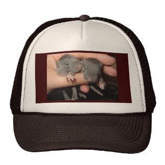 AWWW BABIES! RAT HAT