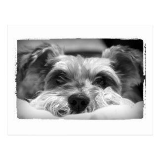 aza black and white photography postcard