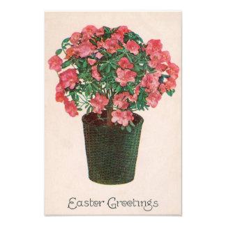 Azalea Potted Plant Easter Photograph