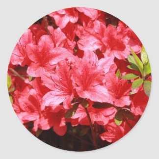azalea red flowers classic round sticker