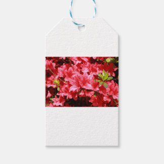 azalea red flowers gift tags