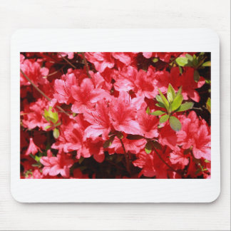 azalea red flowers mouse pad