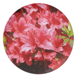 azalea red flowers plate