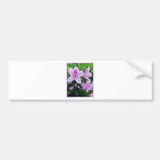 Azaleas bloom bumper sticker
