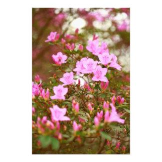 Azaleas blooming in springtime photo art