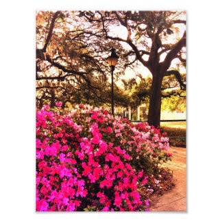 Azaleas In Forsyth Park Photo Print