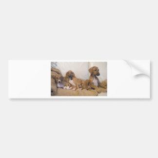 Azawakh Puppies Bumper Sticker