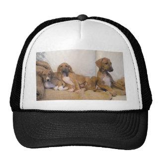 Azawakh Puppies Cap
