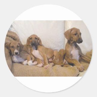 Azawakh Puppies Classic Round Sticker