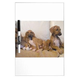 Azawakh Puppies Dry Erase Board
