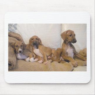 Azawakh Puppies Mouse Pad