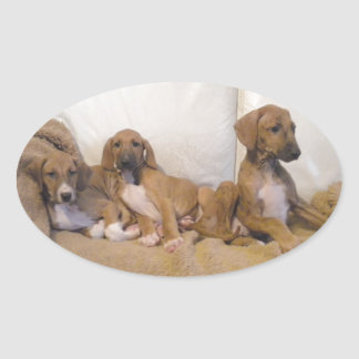 Azawakh Puppies Oval Sticker