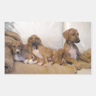 Azawakh Puppies Rectangular Sticker