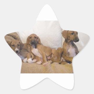 Azawakh Puppies Star Sticker